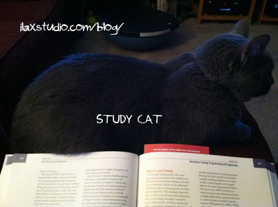 130514STUDYCAT